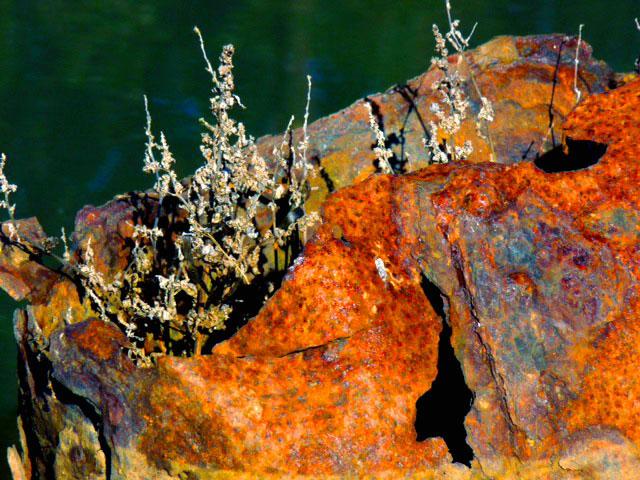 Beach Rust